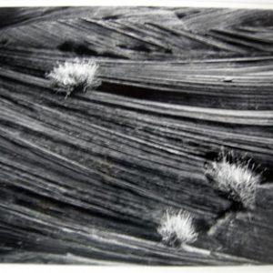 BRUCE BARNBAUM Sandstone and Sage