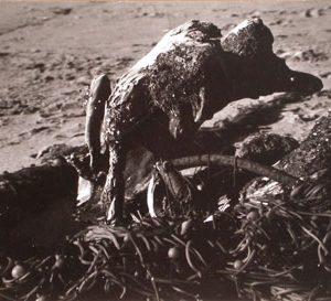 EDMUND TESKE Tangle of Kelp