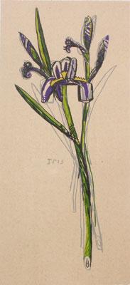DAVID BATES Iris